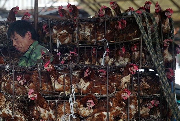 Homem em mercado de pássaros na China