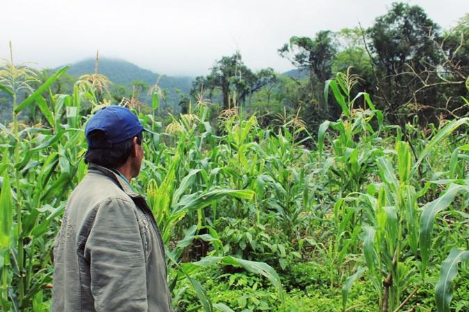 Cultivo guarani na Zona Sul de São Paulo já soma 50 mil m²