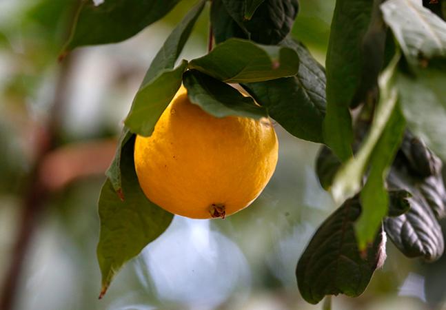 5 frutas típicas da Mata Atlântica brasileira atualmente ameaçadas de extinção