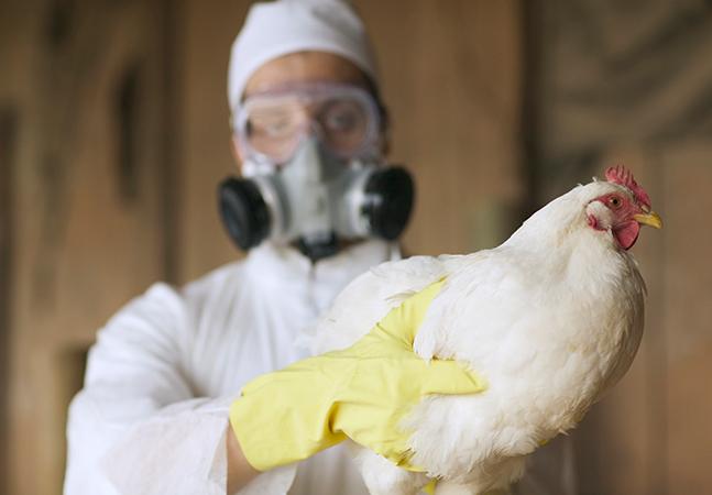 China confirma 1º caso de gripe aviária em humano; risco de disseminação é baixo mas exige atenção