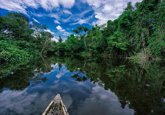 Indígenas preservaram bioma amazônico por 5 mil anos, diz estudo