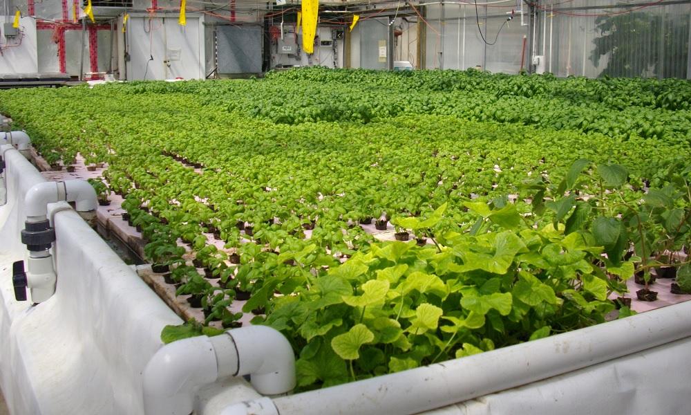 Curso online e gratuito de aquaponia ensina a fazer cultivo doméstico e sustentável