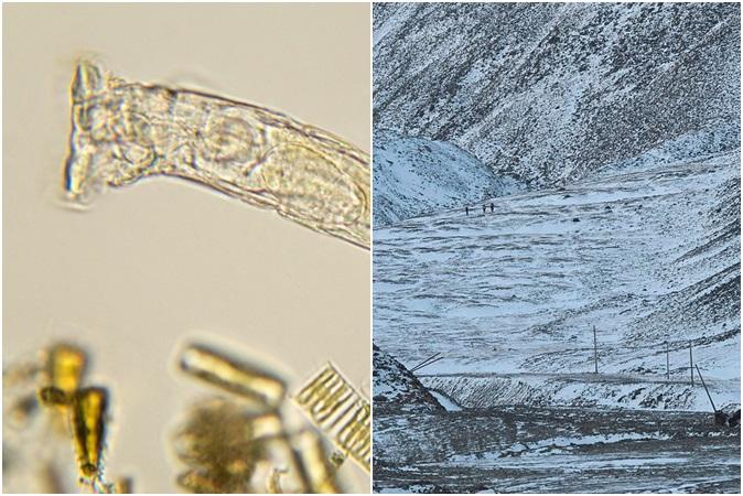 Animal invertebrado é 'ressuscitado' após 24 mil anos de congelamento