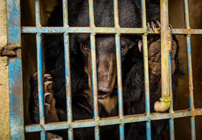 Proibir o comércio de animais silvestres é medida eficaz para prevenir novas pandemias, diz relatório