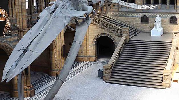 Lobby do Museu de História Natural de Londres