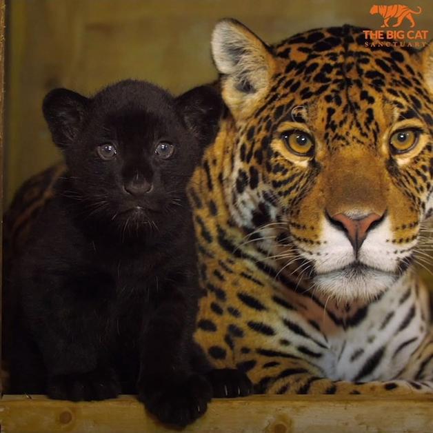 Baby e Keira