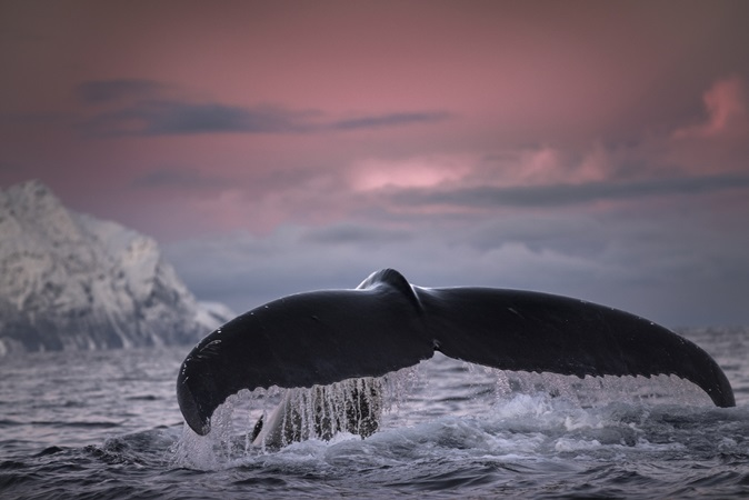 Homem engolido por baleia responde perguntas sobre experiência bizarra