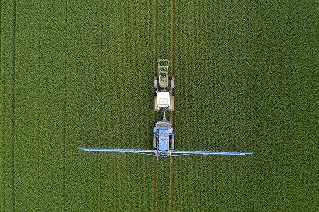 Aplicação de agrotóxico em plantação de trigo
