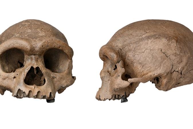 Crânio descoberto na China pode ser de nova espécie de ser humano
