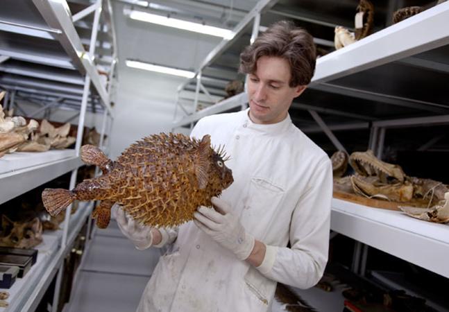 'Uma Noite no Museu': curador cuidou do Museu de História Natural de Londres fechado pela pandemia