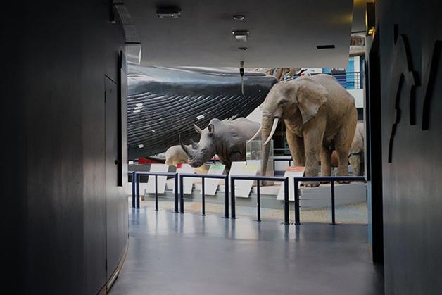 James Maclaine no Museu de História Natural de Londres