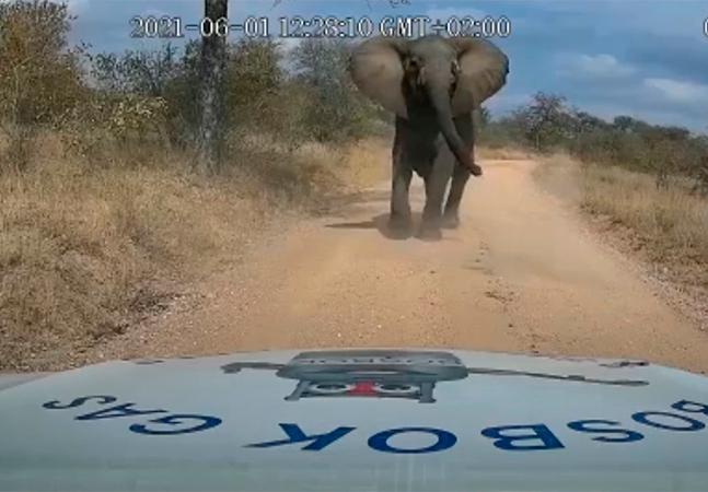 Elefante esmaga carro e deixa motorista em pânico; veja vídeo