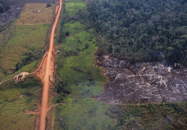 Amazônia: recorte aponta perda de 2,5 bi de árvores desde 2015 por seca e incêndios