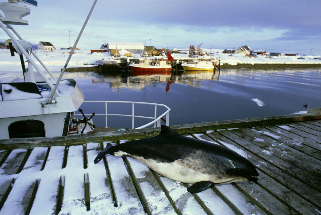 animais em extinção no brasil - toninha