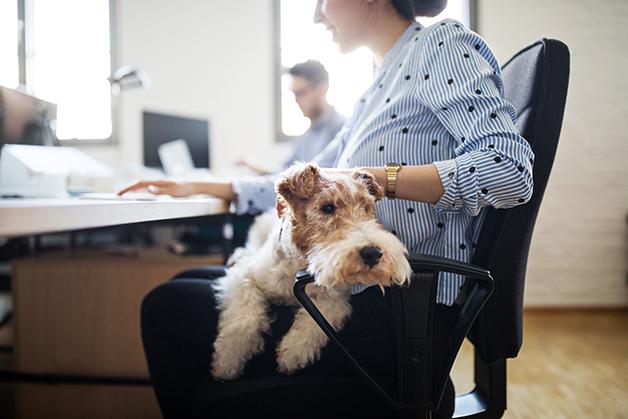 Cachorro em ambiente de escritório