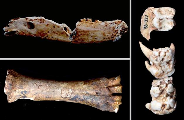 Ossos de animais encontrados no Museu do Ipiranga