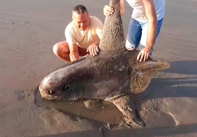 Peixe raro que vive a 700 metros de profundidade é encontrado em praia no Piauí