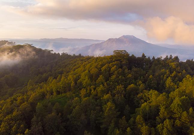 Indonésia reduz desmatamento em 75%, mas preocupação permanece; 'Não deixem a gente ficar como o Brasil'