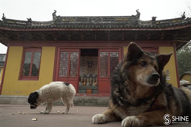 Os animais no templo do monge Zhixiang
