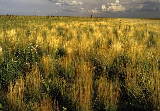 Apagão que ameaça Brasil pode ter explicação no desmatamento do Cerrado