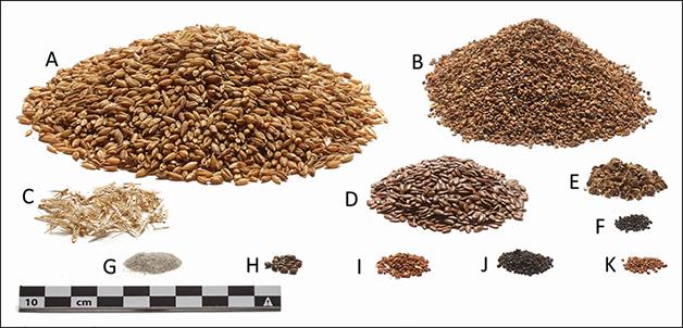Exemplos dos grãos presentes na última refeição