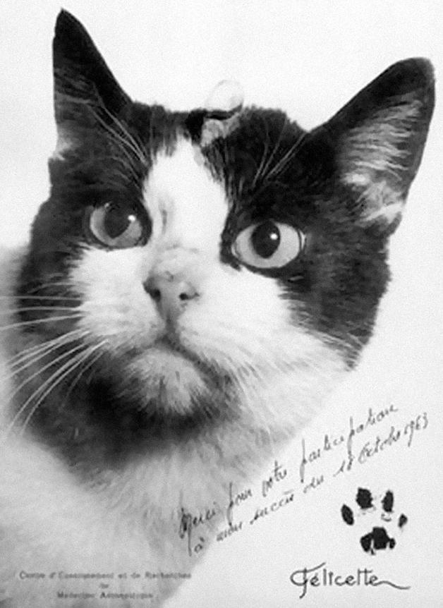 Felicitte se tornou o primeiro e único gato a ir ao espaço