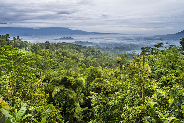 Floresta na Indonésia