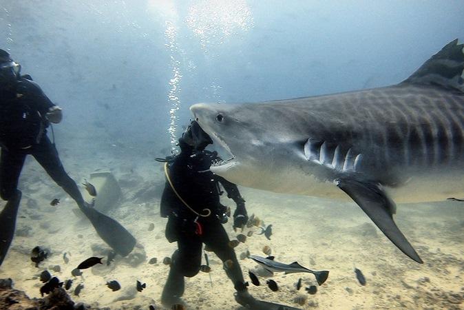 Tubarão aparece 'mordendo' cabeça de mergulhador em foto incrível no fundo do mar