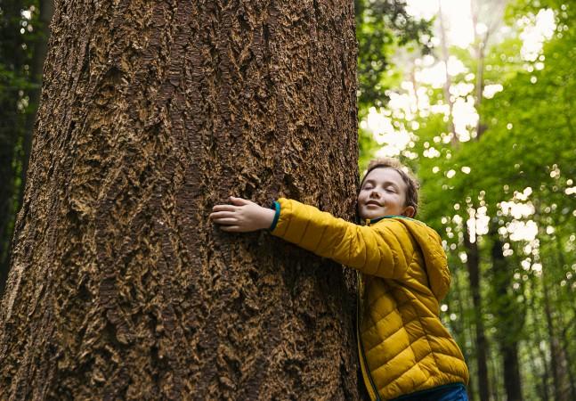 Máquina desenvolvida por brasileiro promete 4 mil árvores plantadas por hora