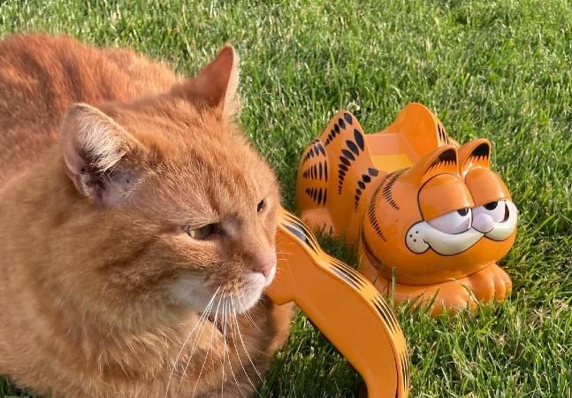 'Garfield' de verdade existe e atende pelo nome de Ferdinando