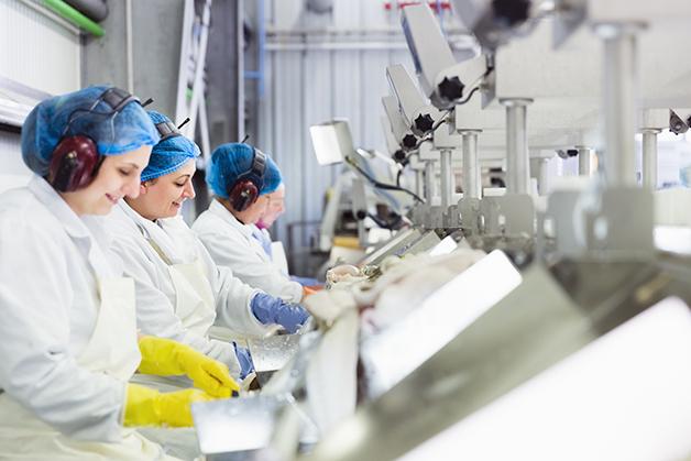 trabalhadoras em fábrica de peixes