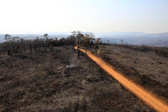 Parque Juquery, com 60% do verde destruído pelo fogo, é última reserva de cerrado em SP