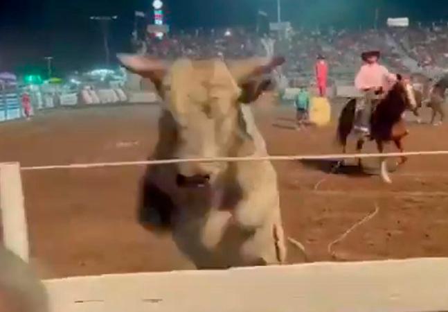 Touro avança contra pessoas que assistiam rodeio; animal teve arma apontada