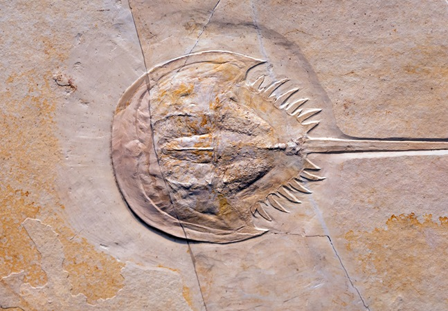 Fóssil de cérebro de 310 milhões de anos é encontrado em bom estado de preservação