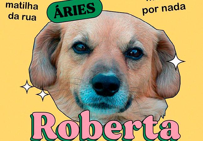 Vira-lata caramelo é estrela de perfil de signos com cachorros fofos; veja o seu