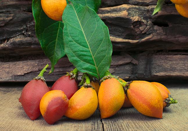 Receitas da Floresta: conheça as PANC, plantas que são alimentícias e você não sabia