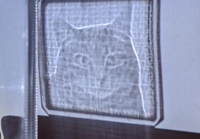 O holograma de um gato esculpido em luz que vai te surpreender