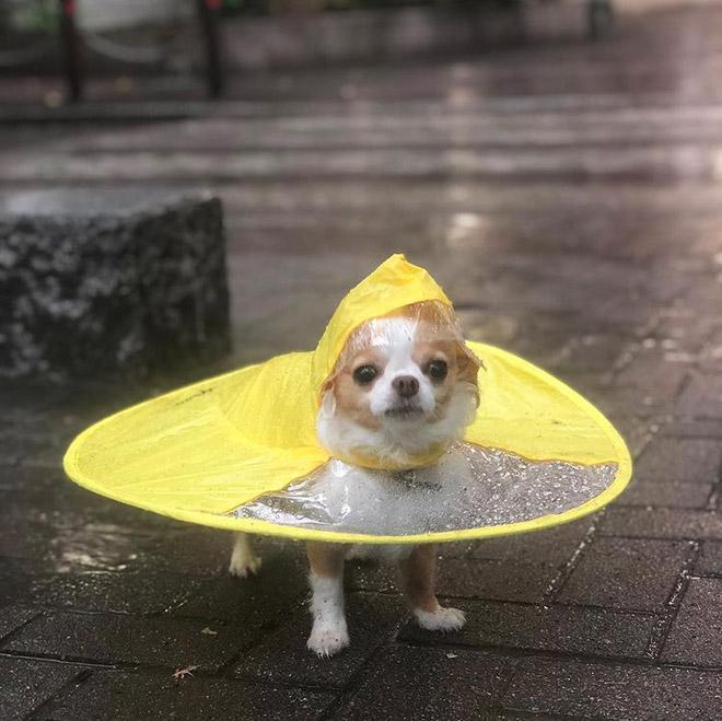 guarda chuva disco voador