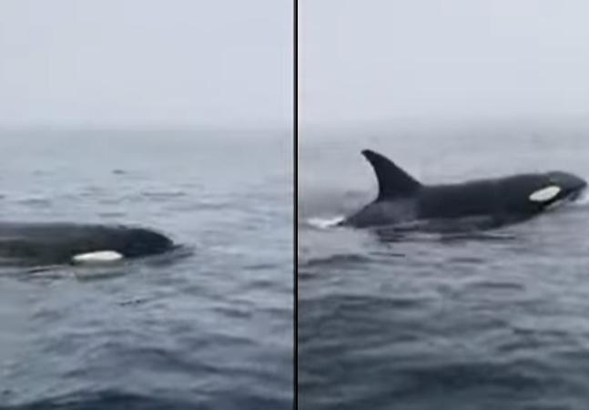 Orcas nadam pertinho de pescadores que sentem 'medo' e 'emoção'; assista ao vídeo