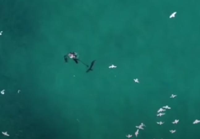 Drone flagra sem querer mergulhador fugindo de ataque de tubarão; veja vídeo