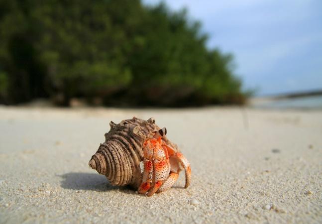 Plástico provoca 'excitação' em caranguejos; aditivo é conhecido como feromônio sexual