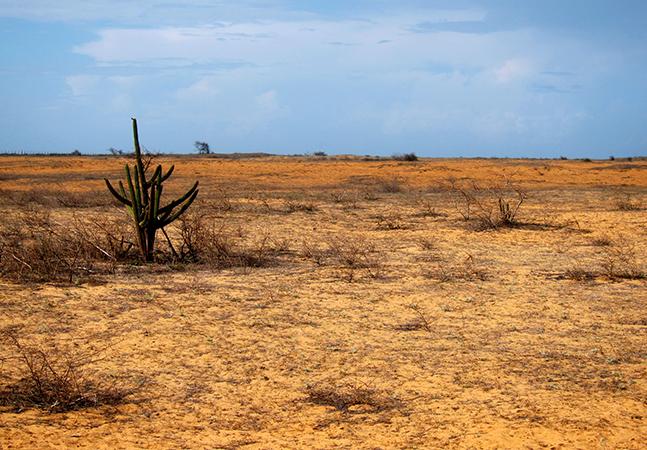 Nordeste abriga deserto do tamanho da Inglaterra criado pela destruição da Caatinga