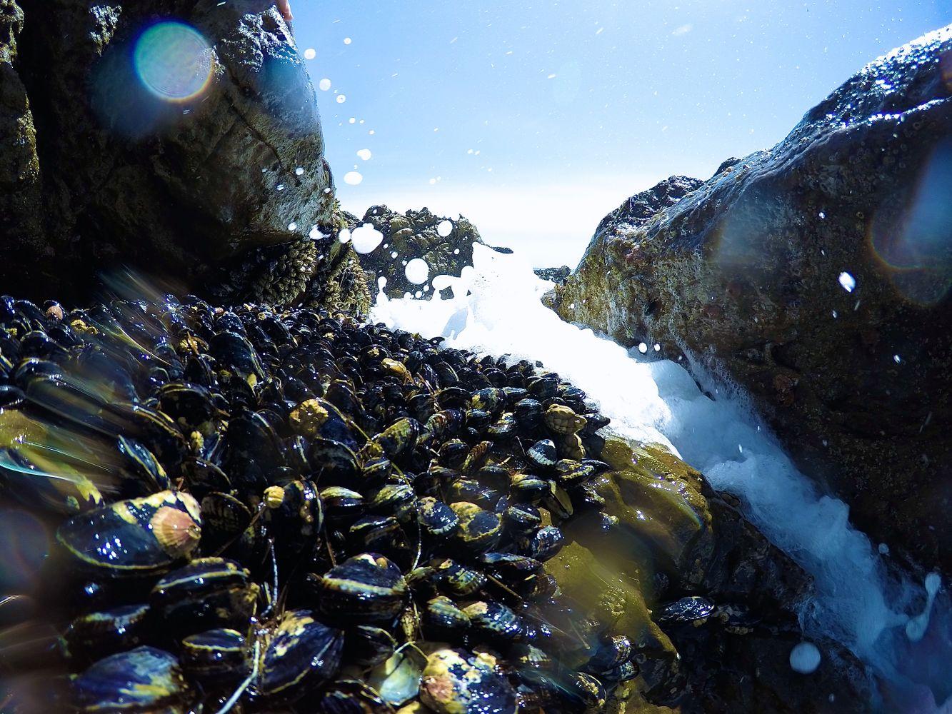 mexilhões oceano