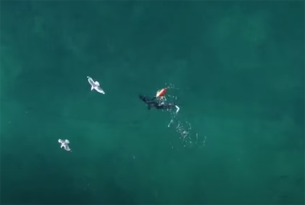 O tubarão também atacou o flutuador preso ao mergulhador