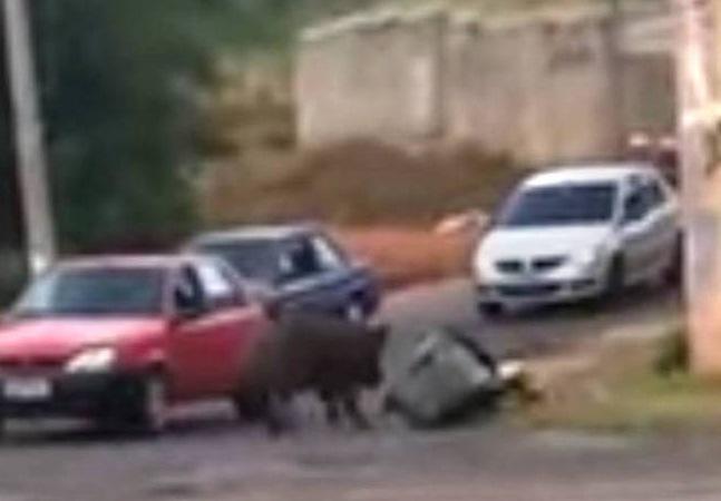 Motoboy mordido por javaporco no trânsito reclama da falta de apoio de tutor do animal