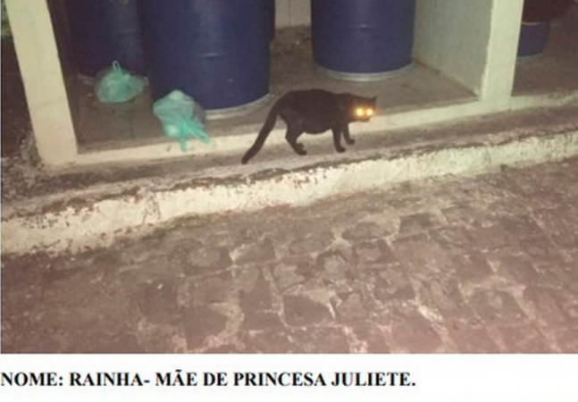Gatos acionam Justiça e assinam processo contra condomínio na Paraíba