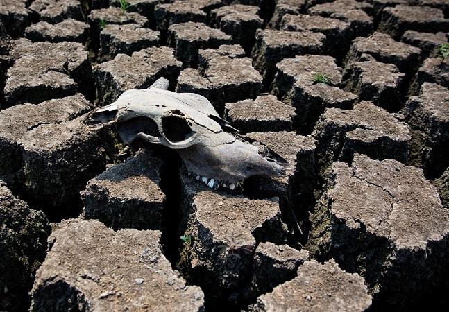 Pantanal é principal indício de que Brasil está secando; área perdeu 74% da água
