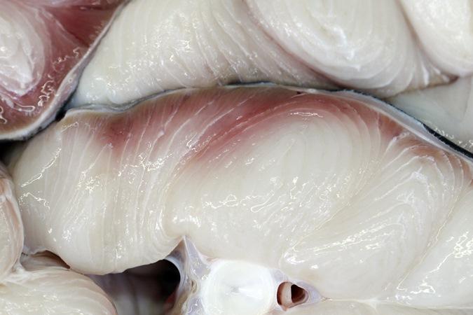 Brasileiros comem carne de tubarão sem saber e ameaçam vida da espécies