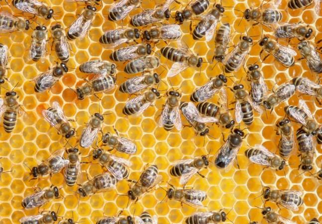 Colmeia robótica promete monitorar até 2 milhões de abelhas