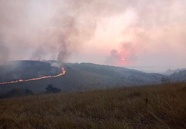 Parque Juquery: imagens de dor e sofrimento após 80% da vegetação destruída pelo fogo